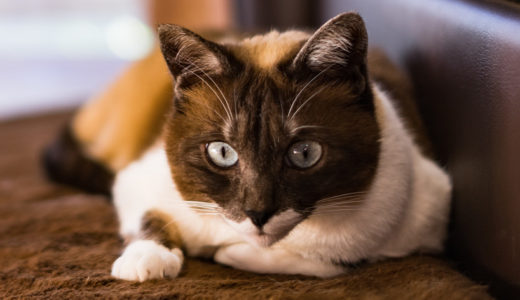 手島姫萌(てしまひめも・スーパー小学生)は猫庭館長!阿知須温泉のコンテナでの保護活動とは?【坂上どうぶつ王国】